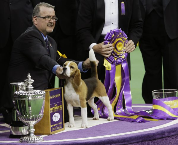 concours-dogs-show-2015