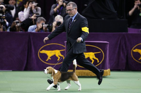 westminster-kennel-club-2015