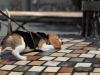 Snoopy rampant