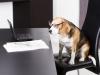 chien bureau travail