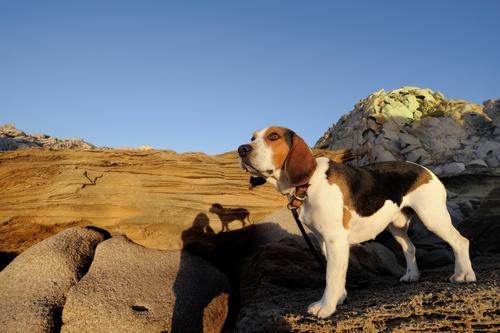 beagle's adventures