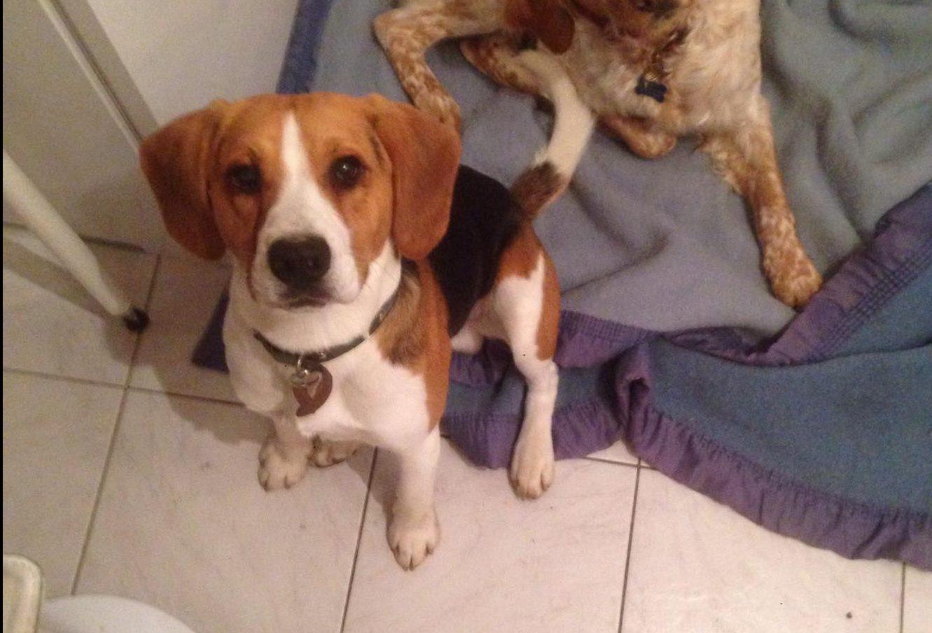 don beagle