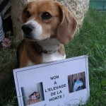 Beagle - manifestation contre la vivisection