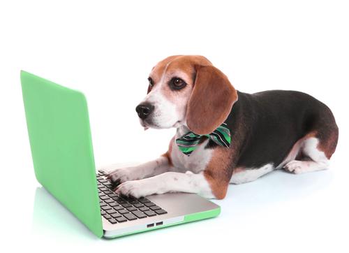 Annonce Passion Beagle