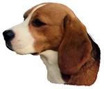autocollant beagle