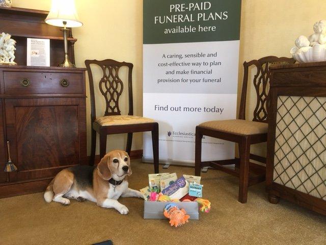 Basil, chien de thérapie