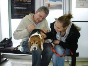 beagle laboratoire liberté