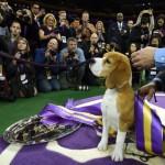 photo de la gagnante du concours canin