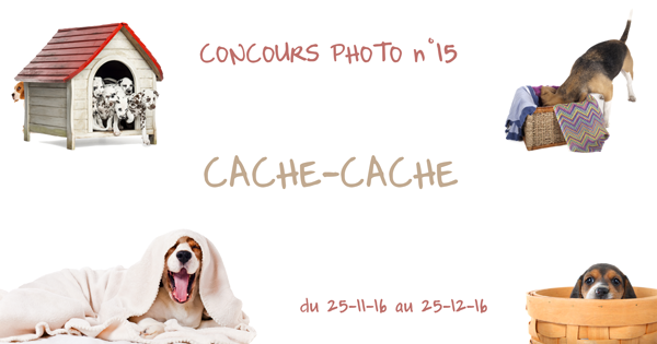 Illustration concours photo beagle 15