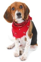 image beagle