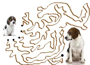 jeu beagle