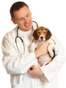 assurance beagle